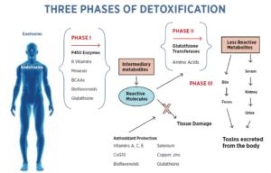 detoksifikasyonun üç fazı